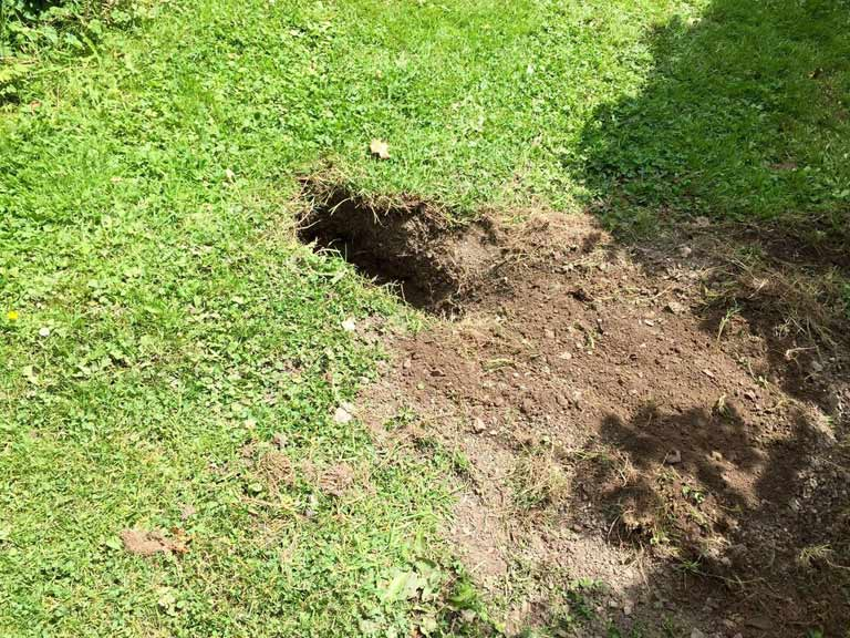 How To Stop Dogs Digging Up Grass