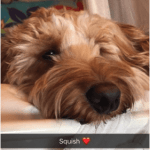 Cockapoo Owner Interview with Polly and Cockapoo Teddy