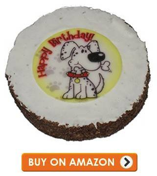 What To Do For Your Dogs Birthday