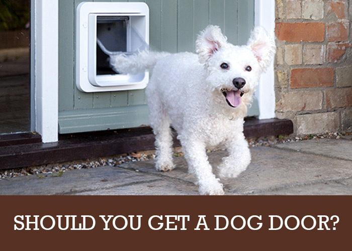 Should You Get A Dog Door For Your Cockapoo Cockapoo Hq