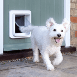 Should You Get a Dog Door for Your Cockapoo?