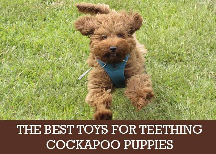 Cockapoo Puppy Toys For Teething: We Look At The Best Ones
