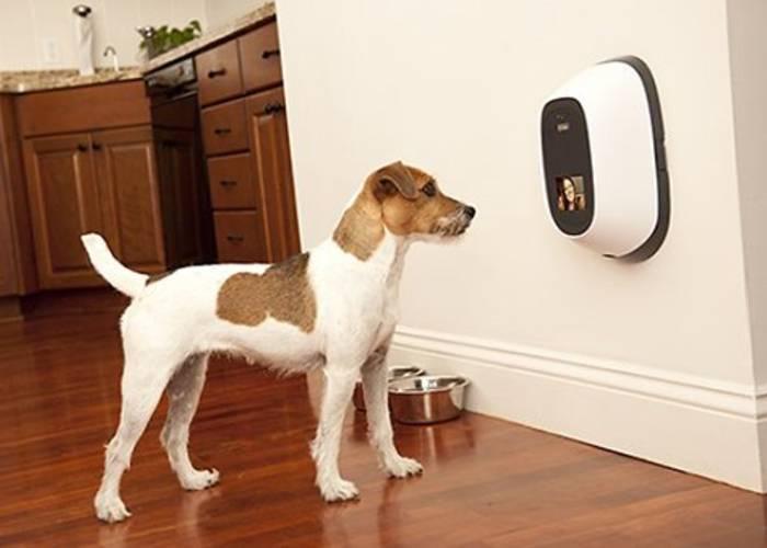 Dog Cameras