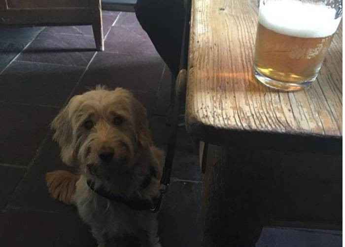 Taking Your Cockapoo To The Pub